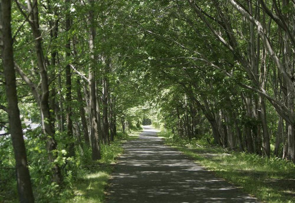 A view of the Delaware and Raritan Canal path trail with trees on either side