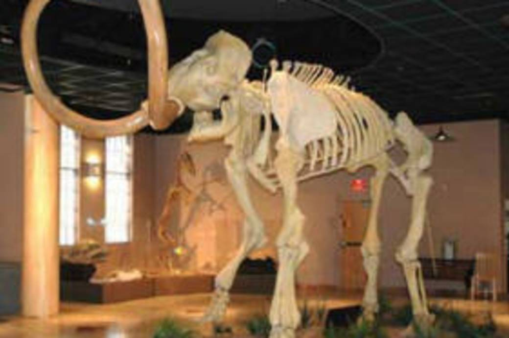 Arizona Museum of Natural History Wooly Mammoth