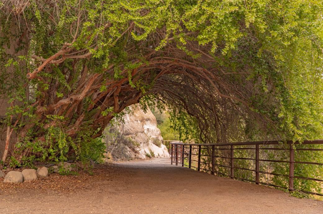Boyce Thompson Arboretum - Catwalk