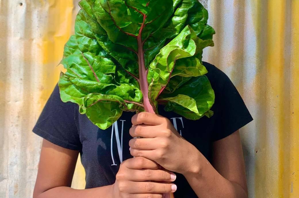 Greenhouse Garden - seasonal produce, captured by @j9mcc