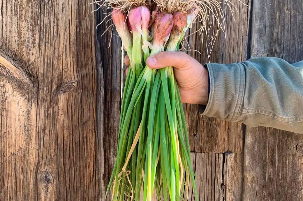 Greenhouse Garden - organic produce, captured by @j9mcc