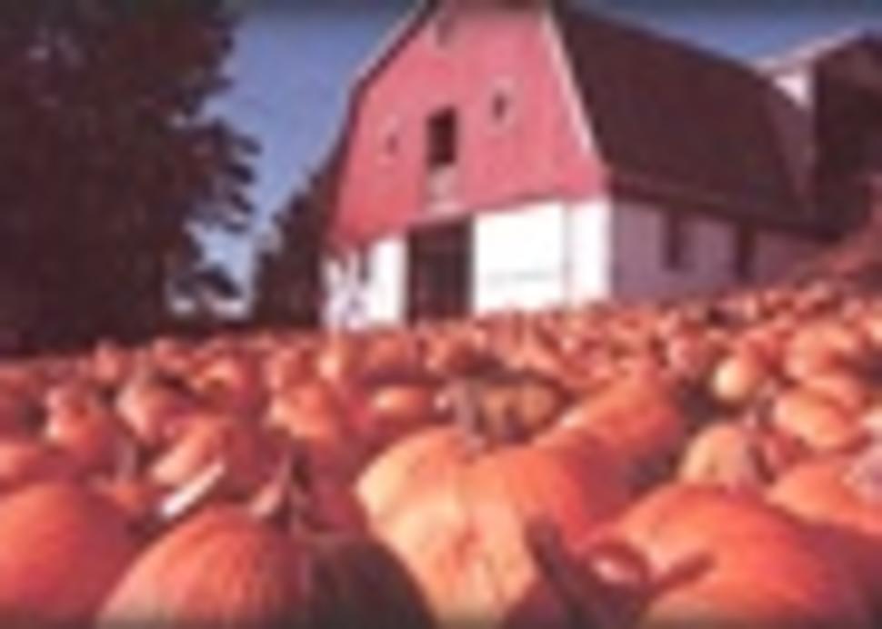 10778_tims pumpkin patch.jpg