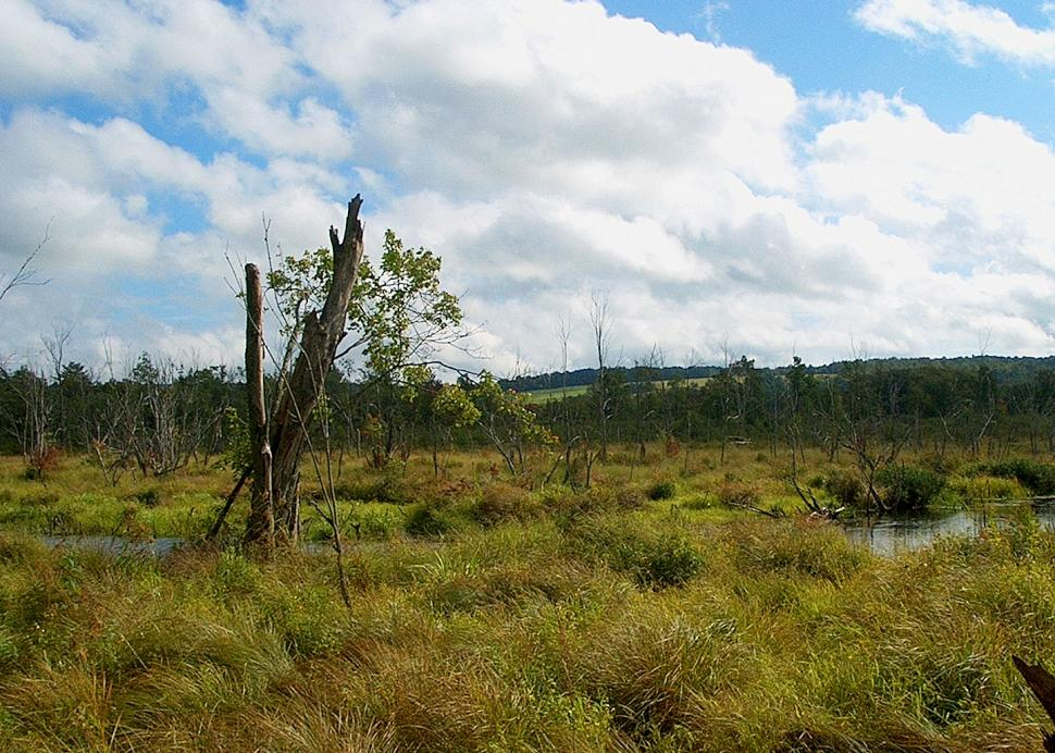 Fluffy wetlands with blue sky