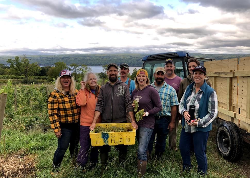 Hand harvest at Atwater Estate Vineyards