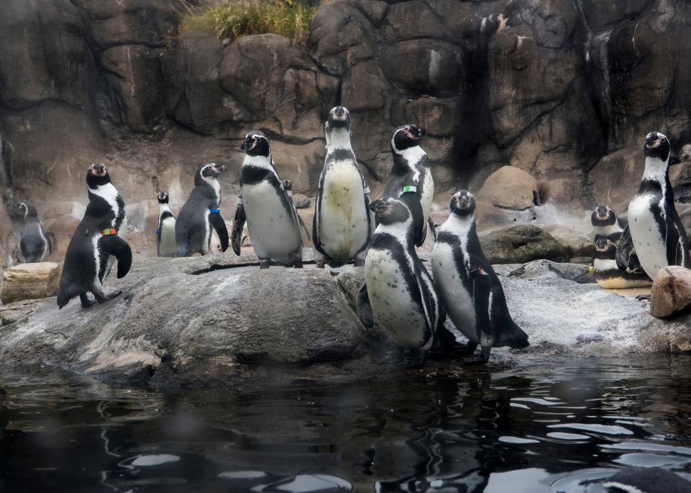 Penguins at Rosamond Gifford Zoo at Burnet Park