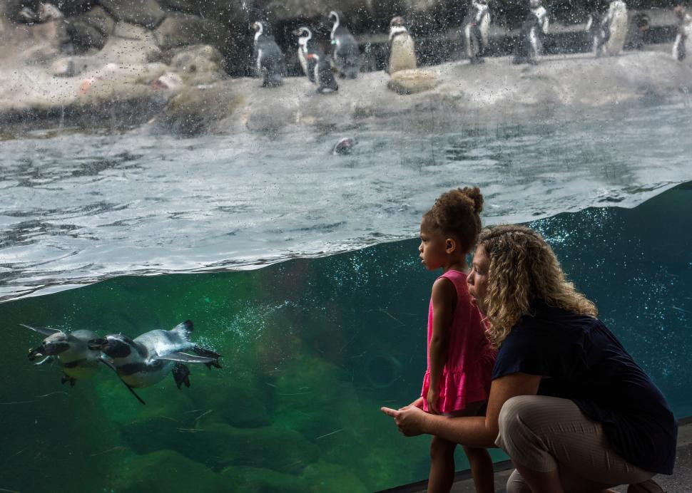 Girl and mother watching penguins at Rosamond Gifford Zoo at Burnet Park