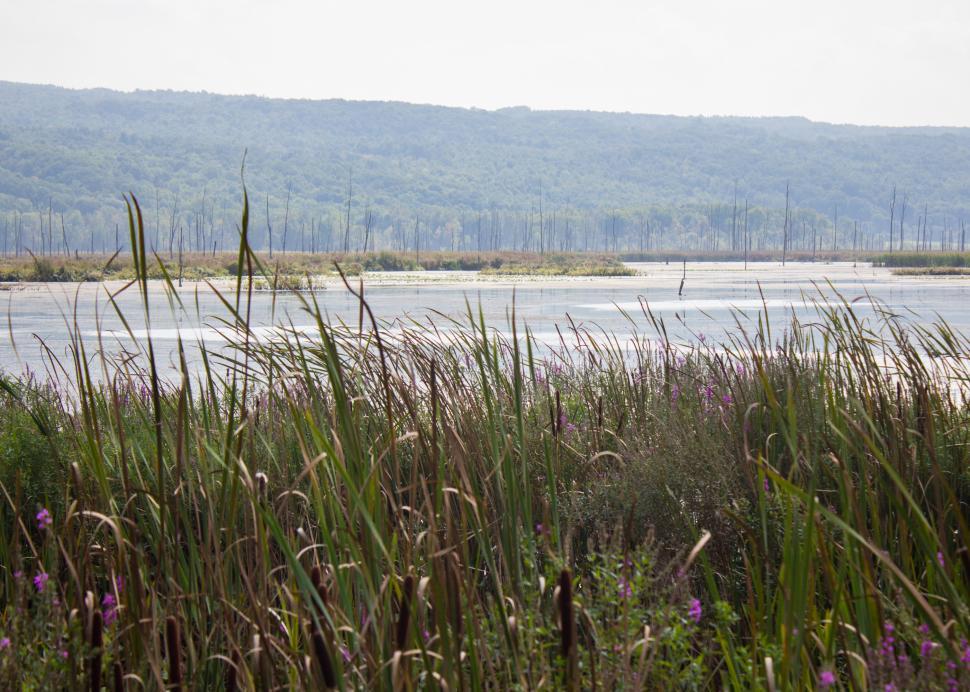 Conesus Lake Inlet