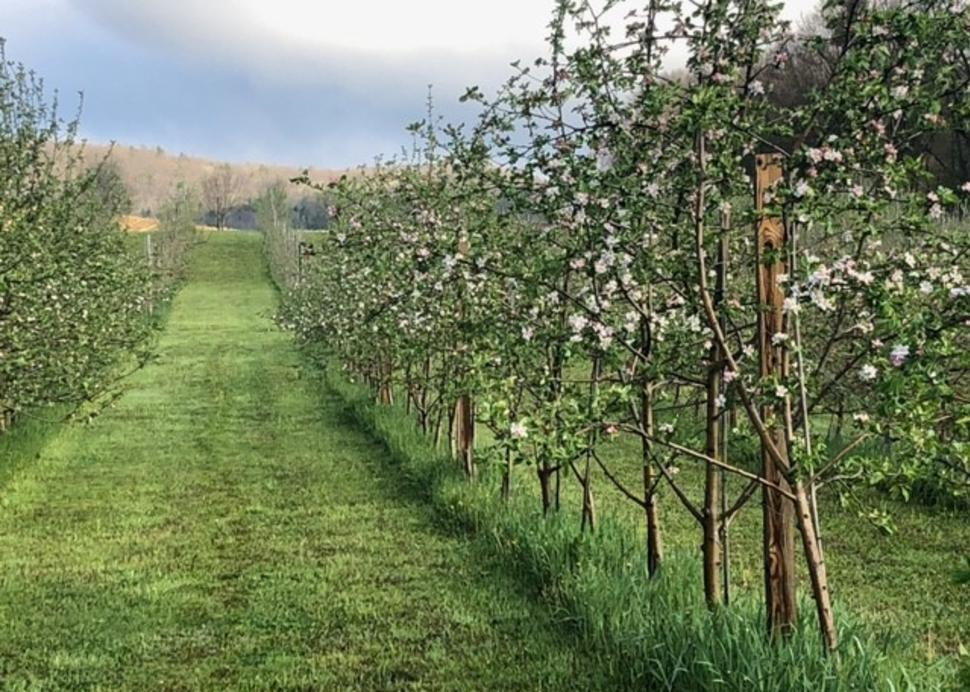 Crooked Line orchard