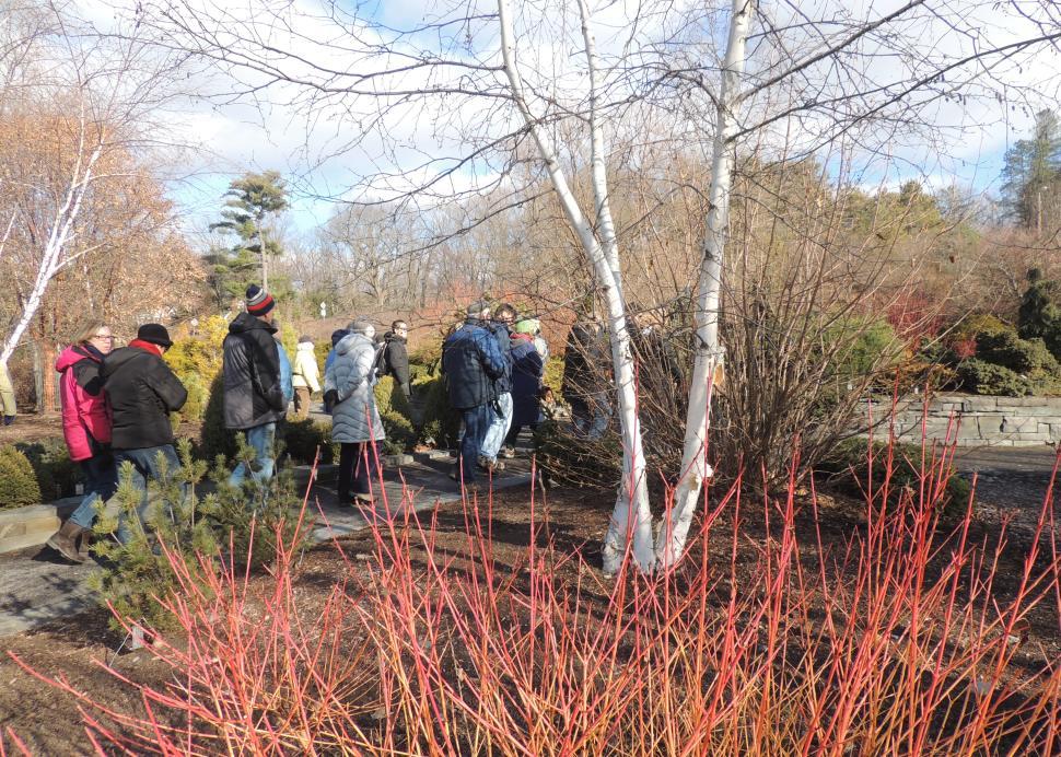 Winter Cornell botanic Garden