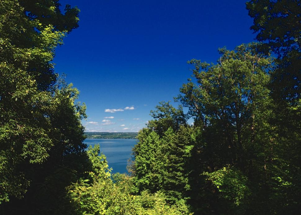 Cayuga Lake view (from owner's back yard)