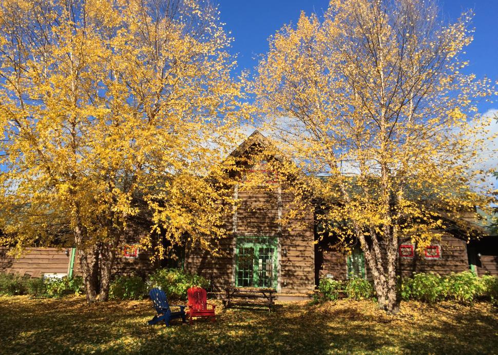 Backyard at the Lodge