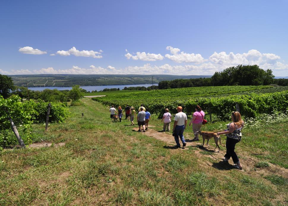 Fulkerson_Winery_Tour