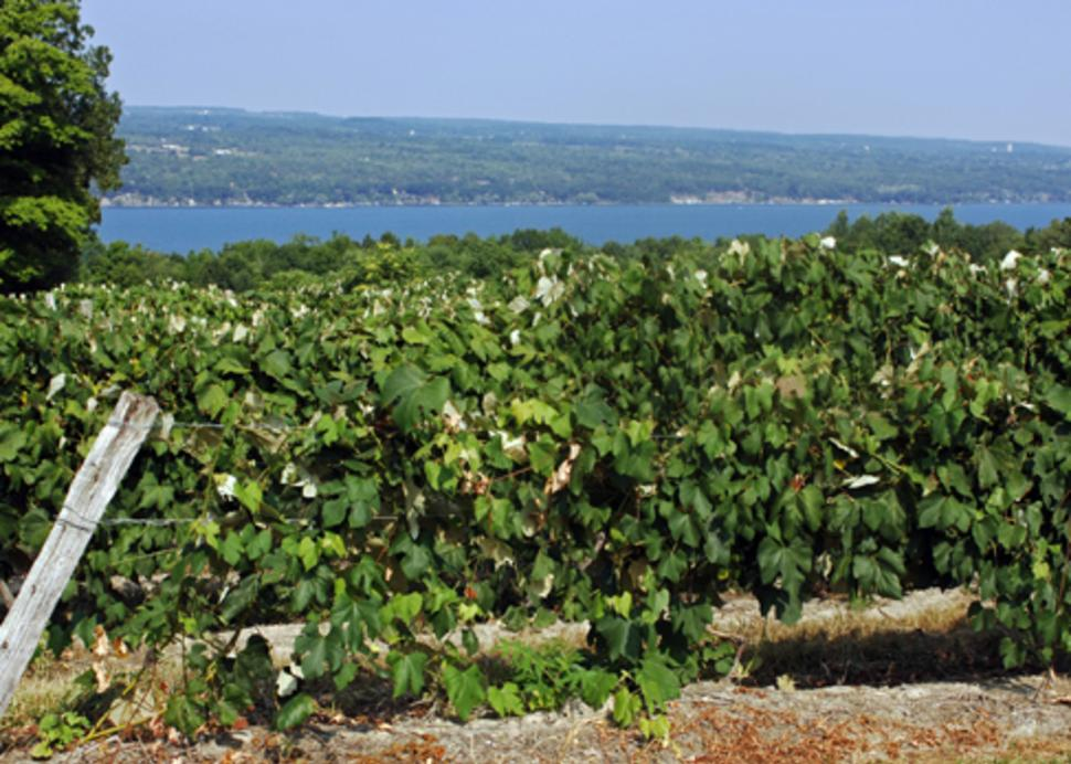 Finger Lakes Wine