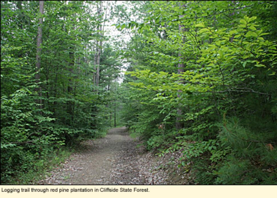Arnot State Forest