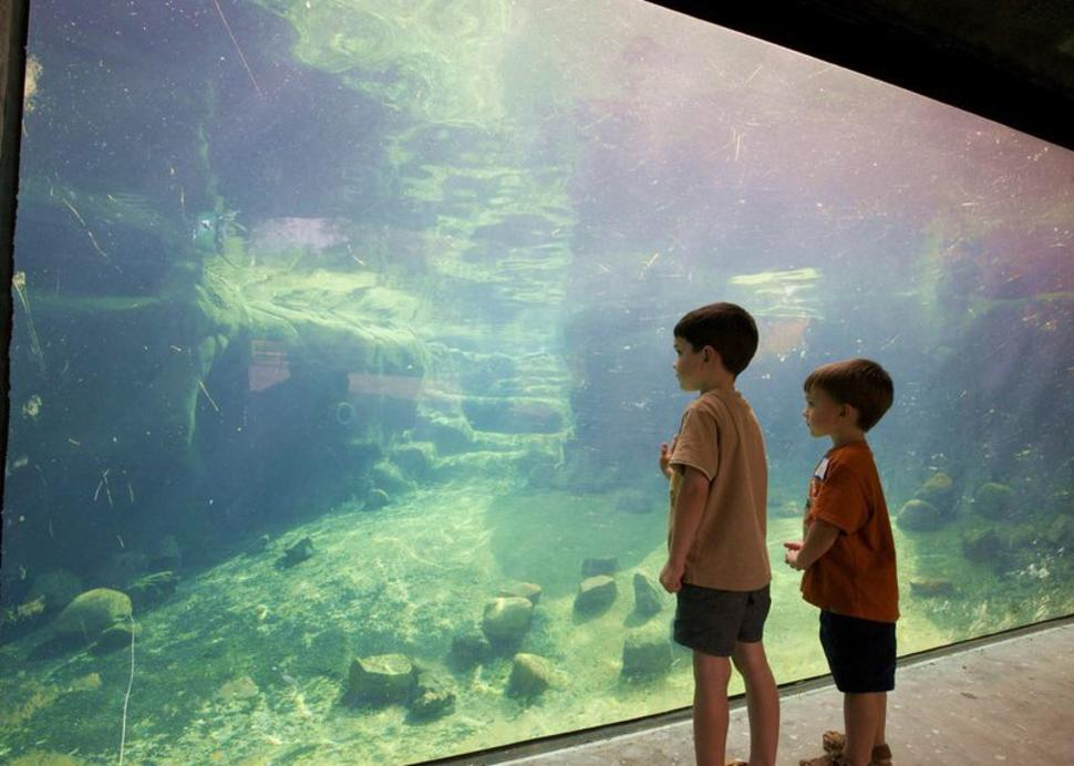 Kids watching Penguins