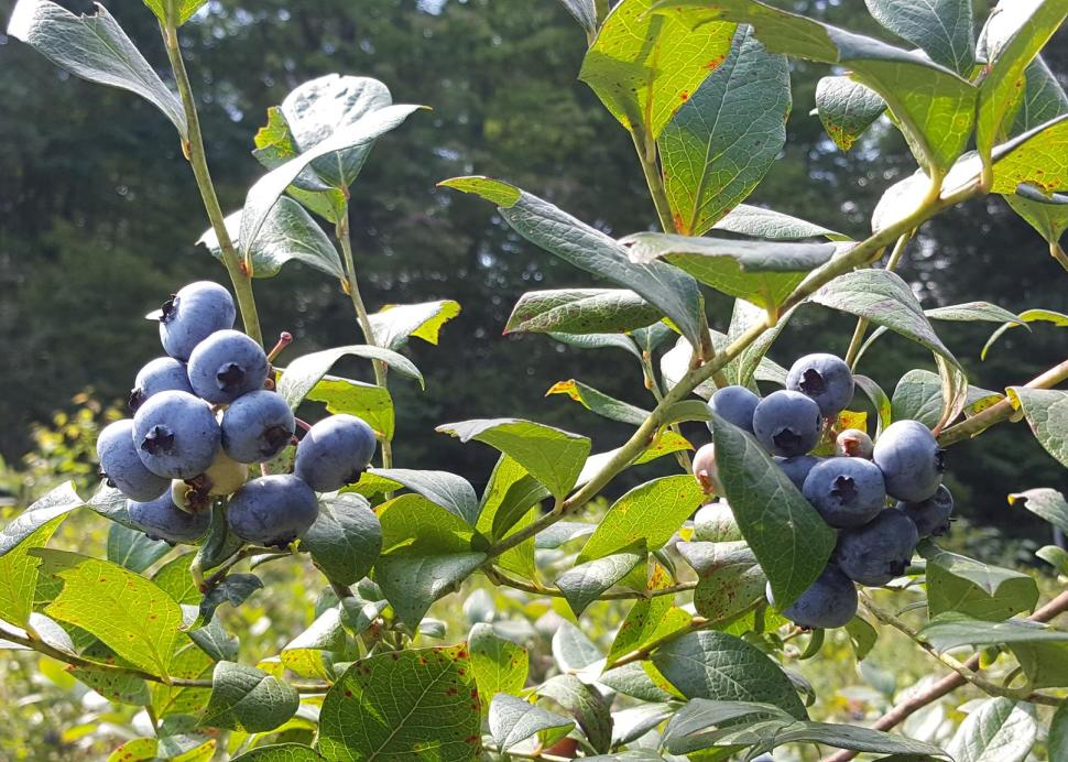 Parkland Berry Farm