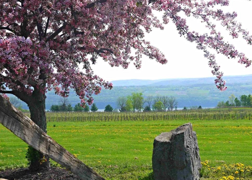 Castel Grisch Winery & Restaurant  Spring View