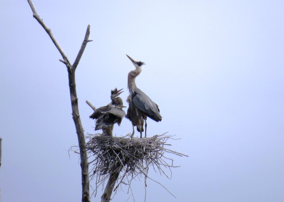 Sterling Nature Center Birding