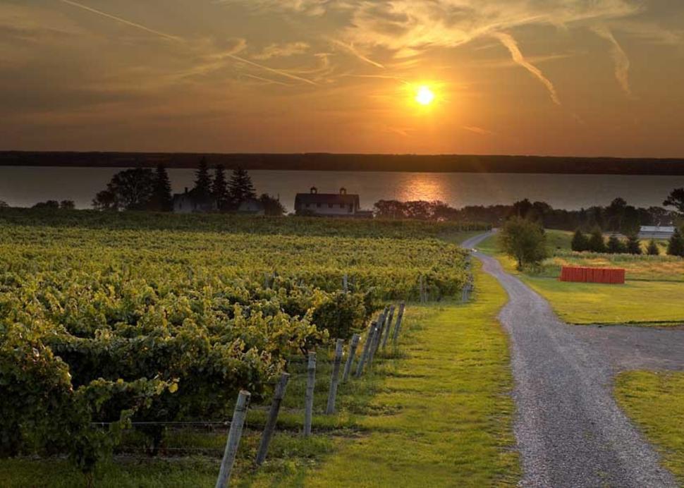 Sunrise over Fox Run Vineyards