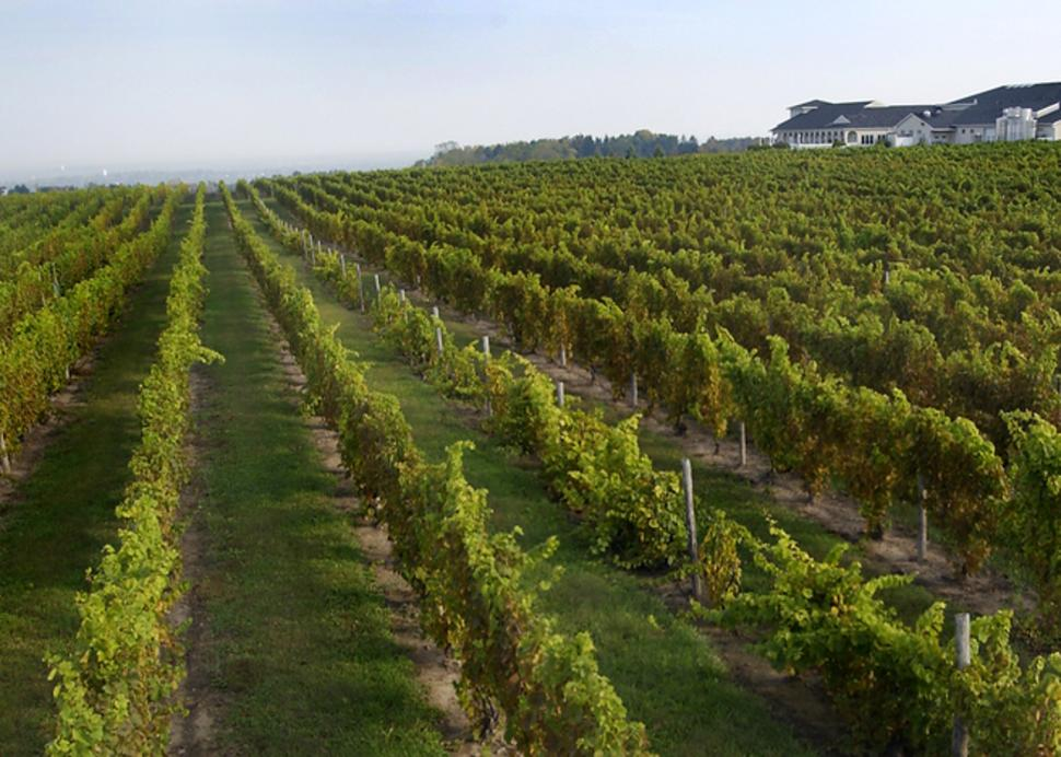 casa-larga-vineyards-and-winery-fairport-vineyards