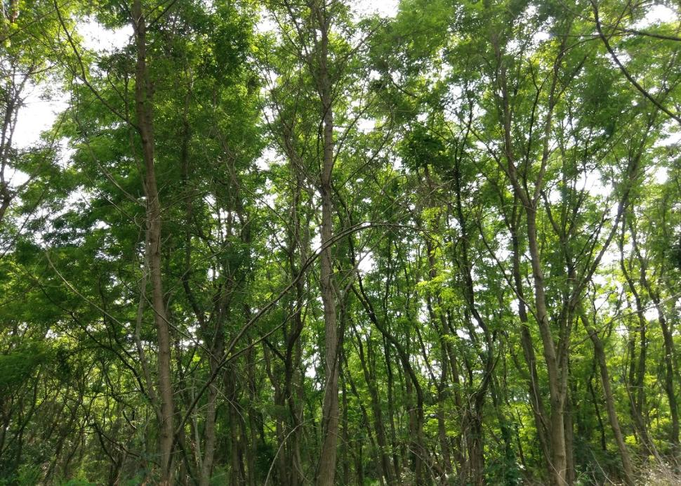 Photo of trees overhead at the Kashong Conservation Area