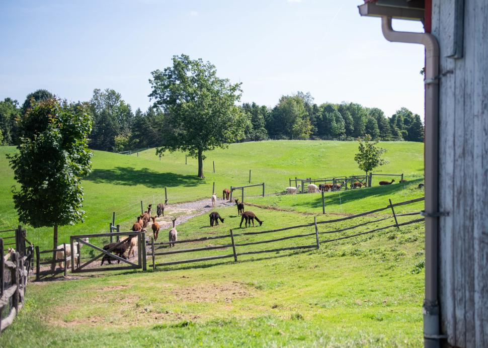 Photo of the grounds of Lazy Acres Alpaca