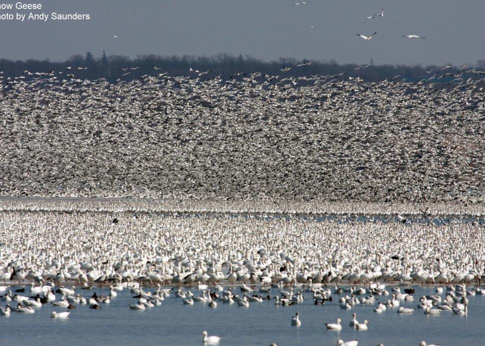 Waterfowl Migration at Montezuma