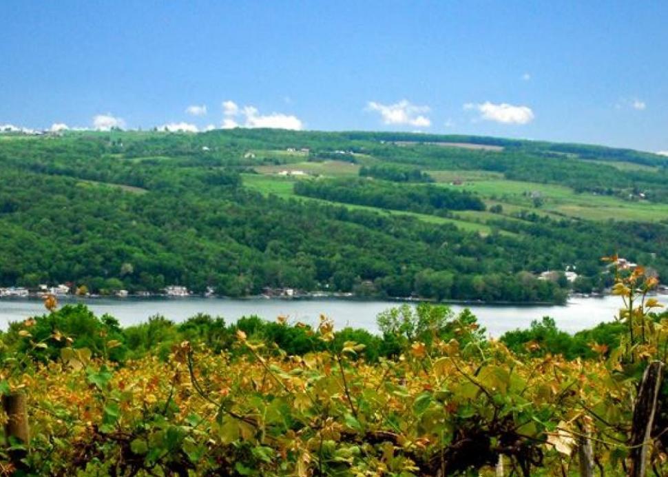 View from Keuka Lake Vineyards