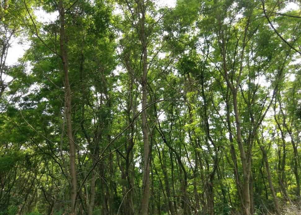 kashong-conservation-area-geneva-9