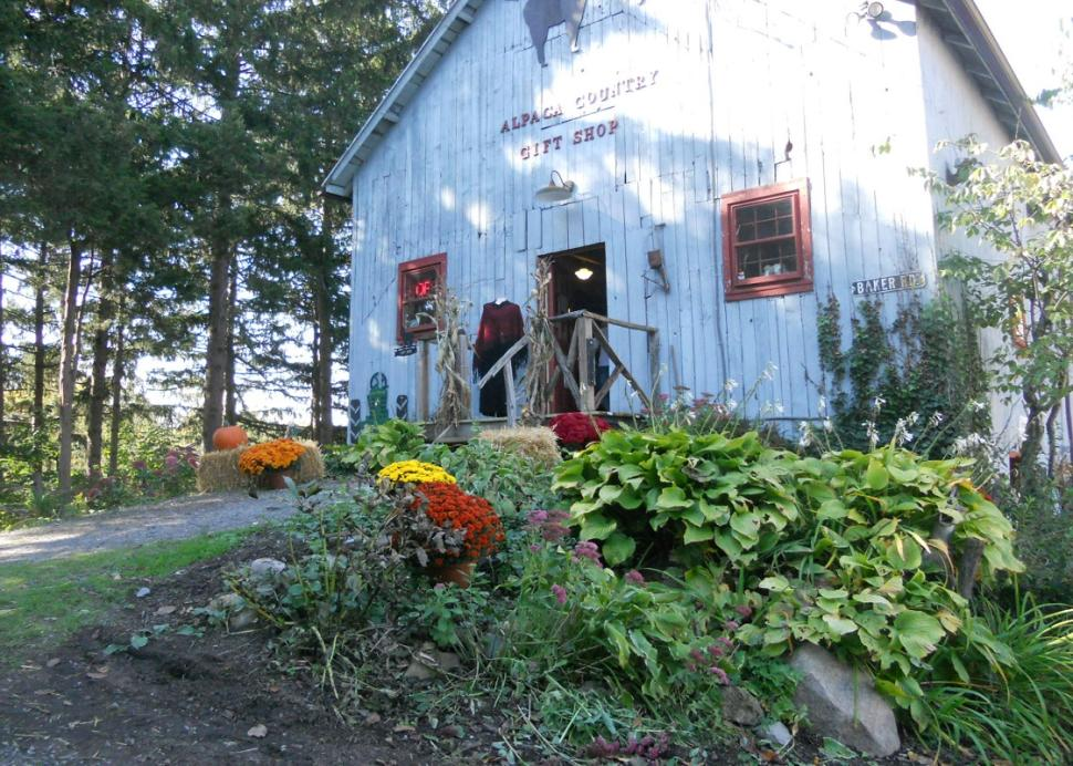 lazy-acre-alpacas-bloomfield-building