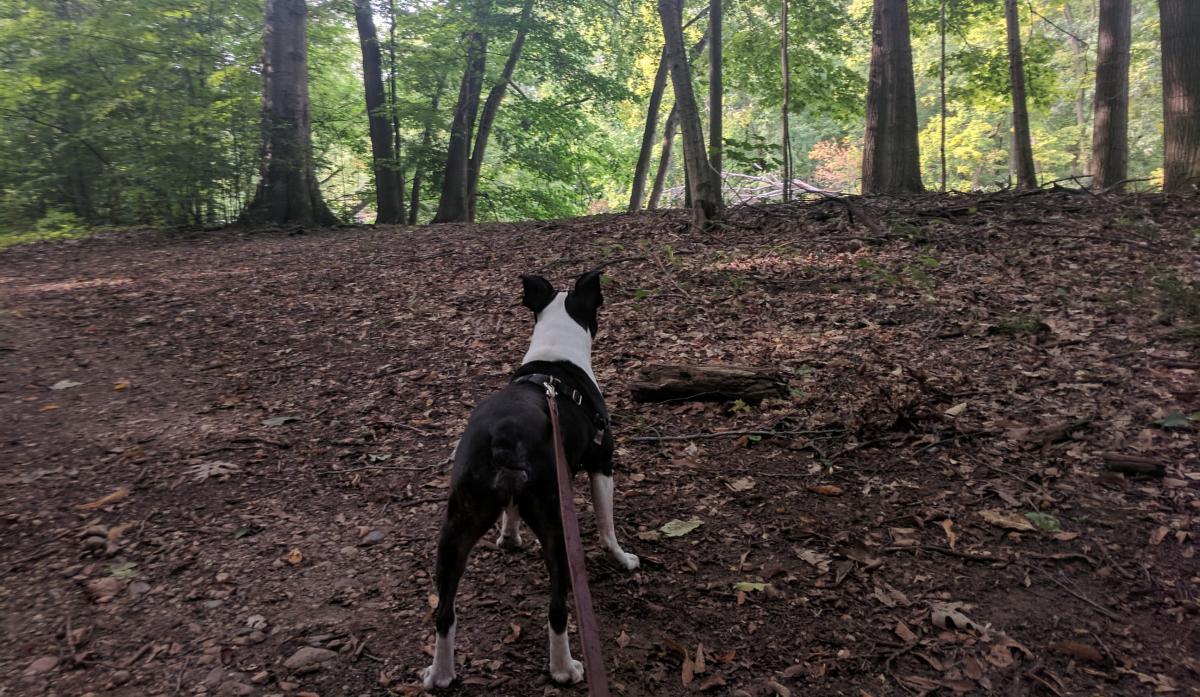 Dog trail Granger Meadows