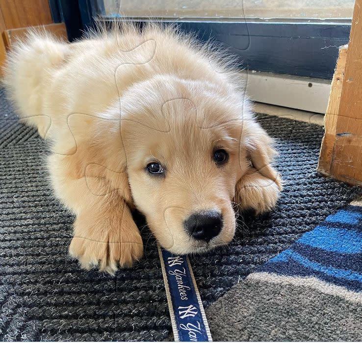 New Trenton Thunder Puppy