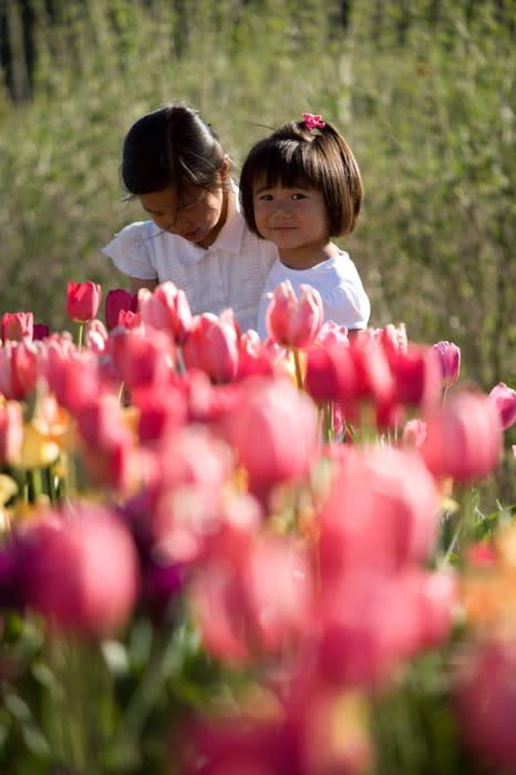 Kids Tulip Festival