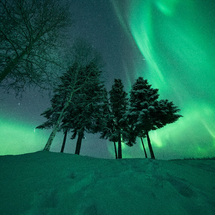 Solstice - aurora behind trees