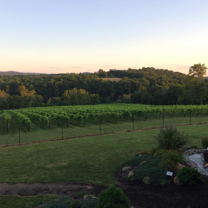 Cana Vineyards & Winery - Loudoun County,  VA