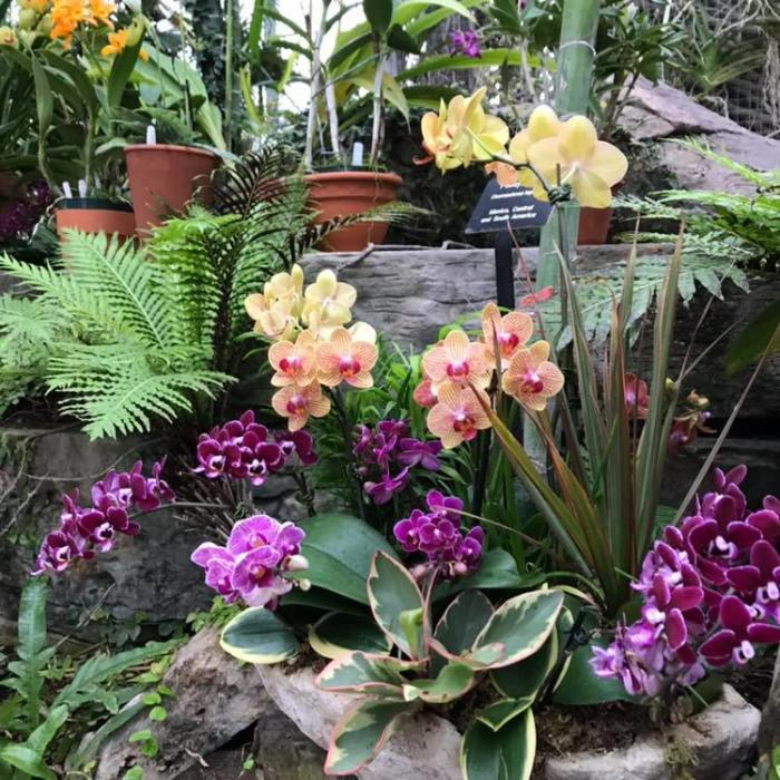 Nicholas Conservatory orchids