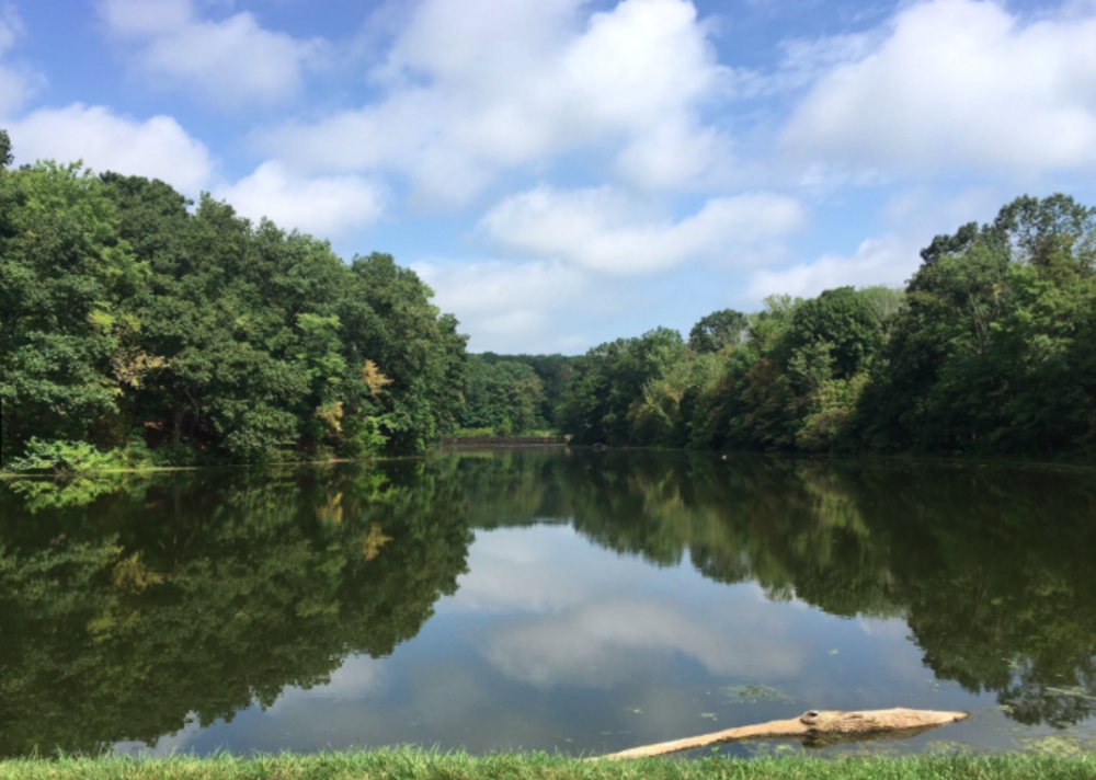 A view of the water and woodlands at the Mountain Lakes Nature Preserve Trail