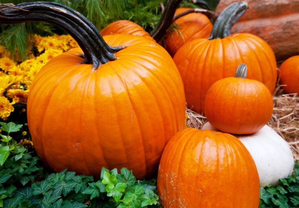 Whitehall Hotel Pumpkins