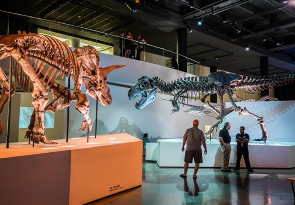 60 Off General Admission Ticket At The Houston Museum Of Natural