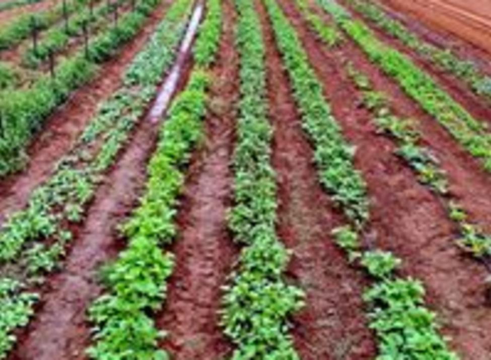 Arison Farm