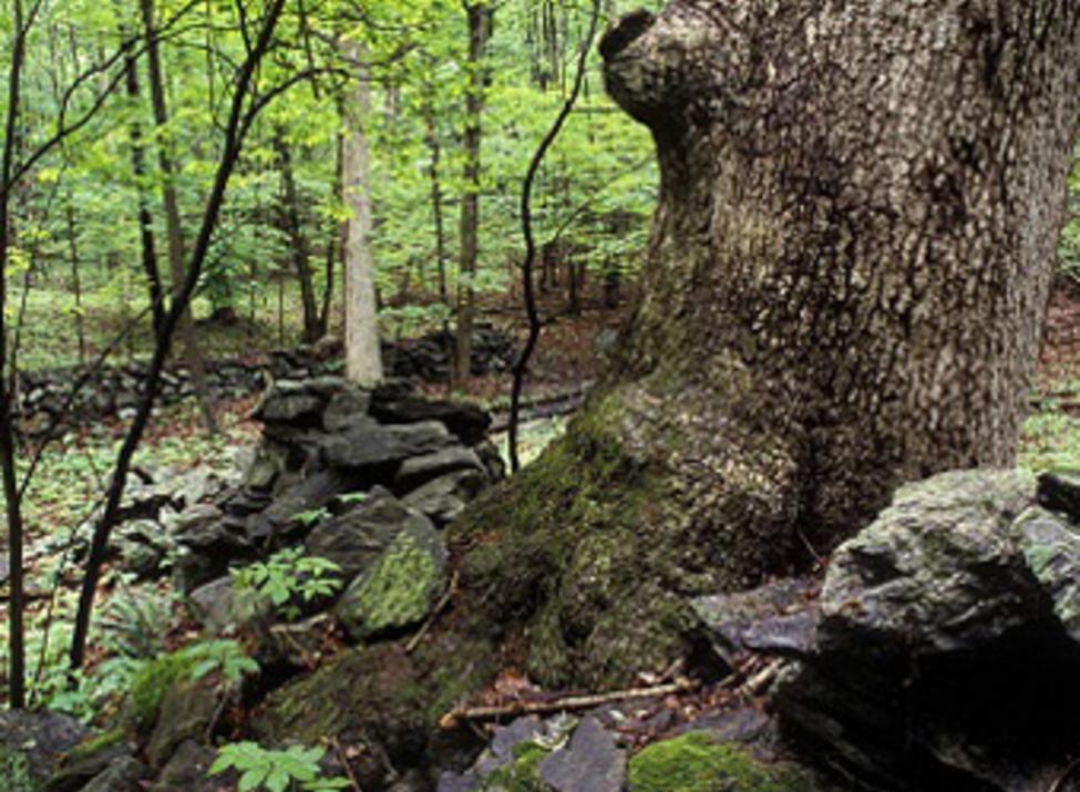 henry morgenthau preserve