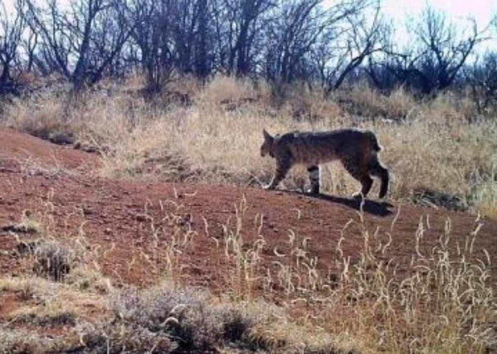 Wildcat Bluff