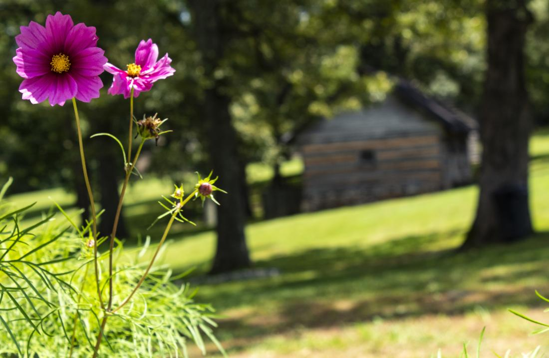 Flowers blooming at Historic Collinsville