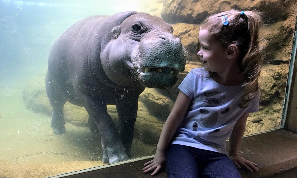 Girl and Hippo at Louisville Zoo
