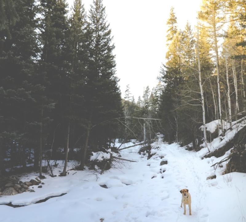 Gus on Glenhaven Trail