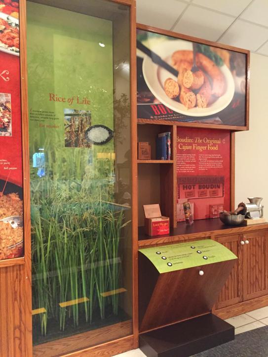 Rice exhibit at Adventure Point