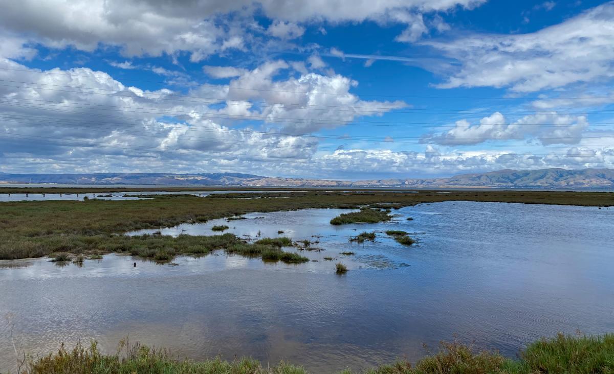 Palo Alto Nature Preserve