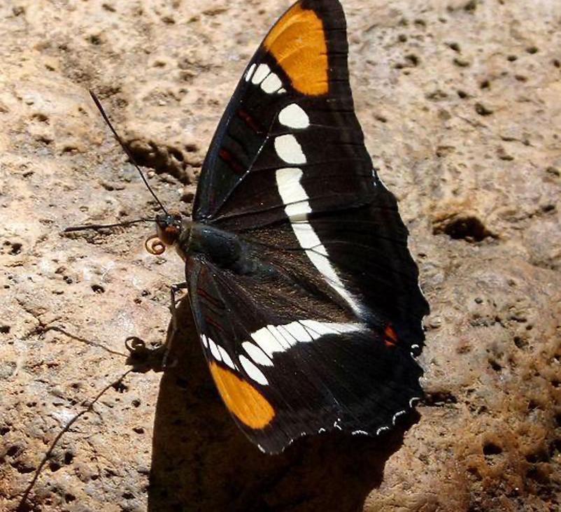 ABQ Butterflies 4