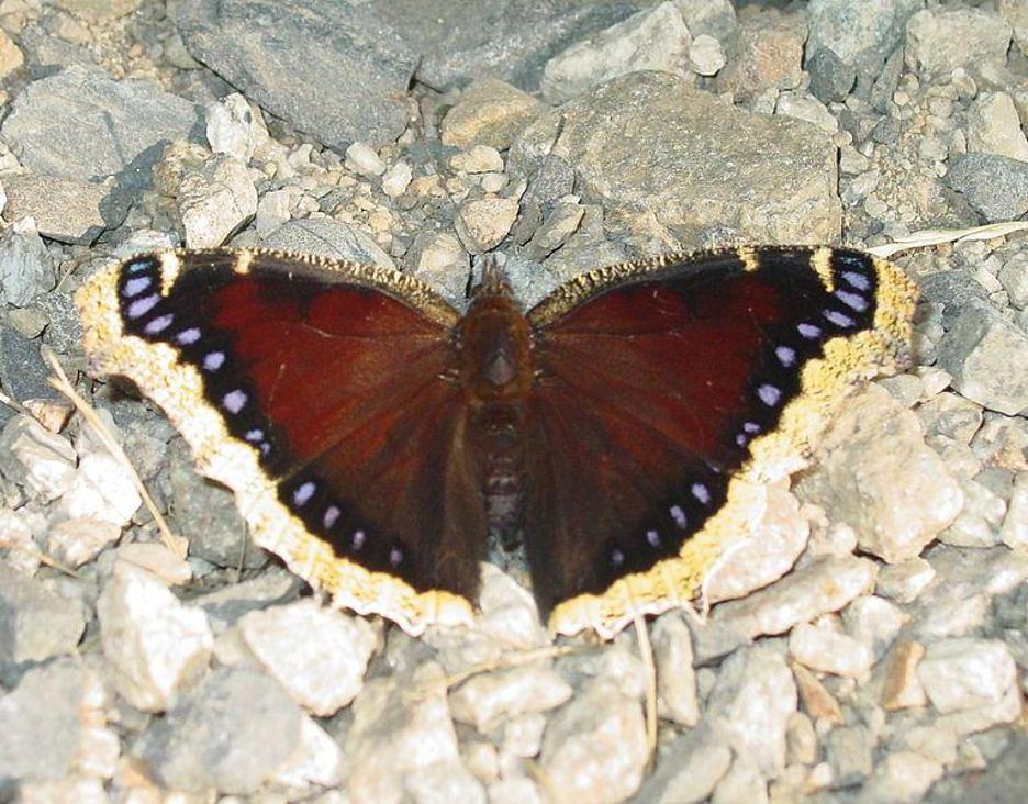 ABQ Butterflies 3