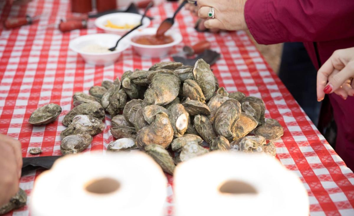 Local oysters await to be shucked at the annual St. Simons Land Trust Oyster Roast